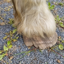 Tilly's feet when she arrived